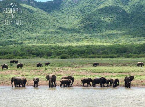 2018 - elephants