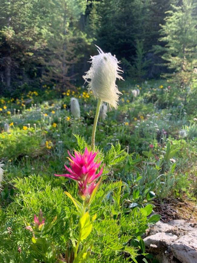 Mountain wildflowers lake magog