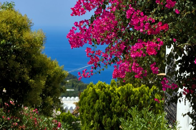A breathtaking view of Capri Island.