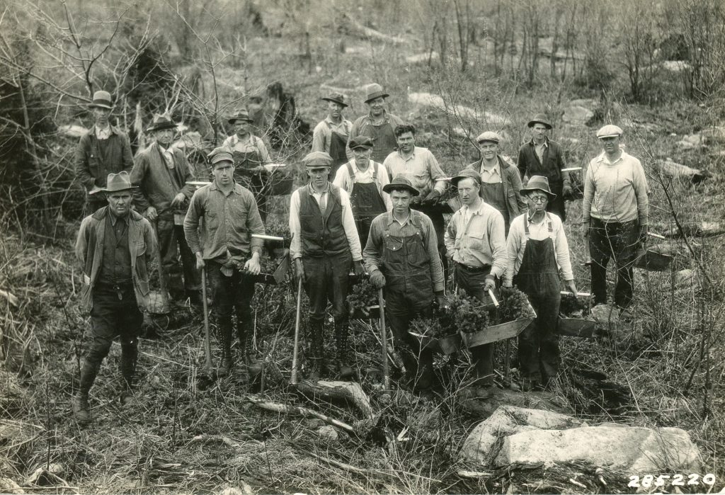 Monongahela National Forest: Canaan Mountain Planting Crew