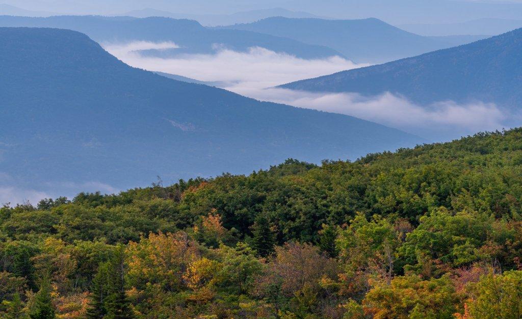 Bear Rocks: Potomac Valley mist