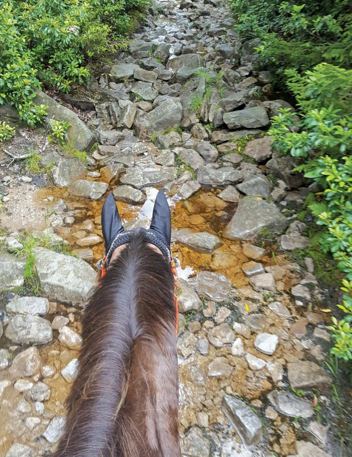 Rocky Horse Trail