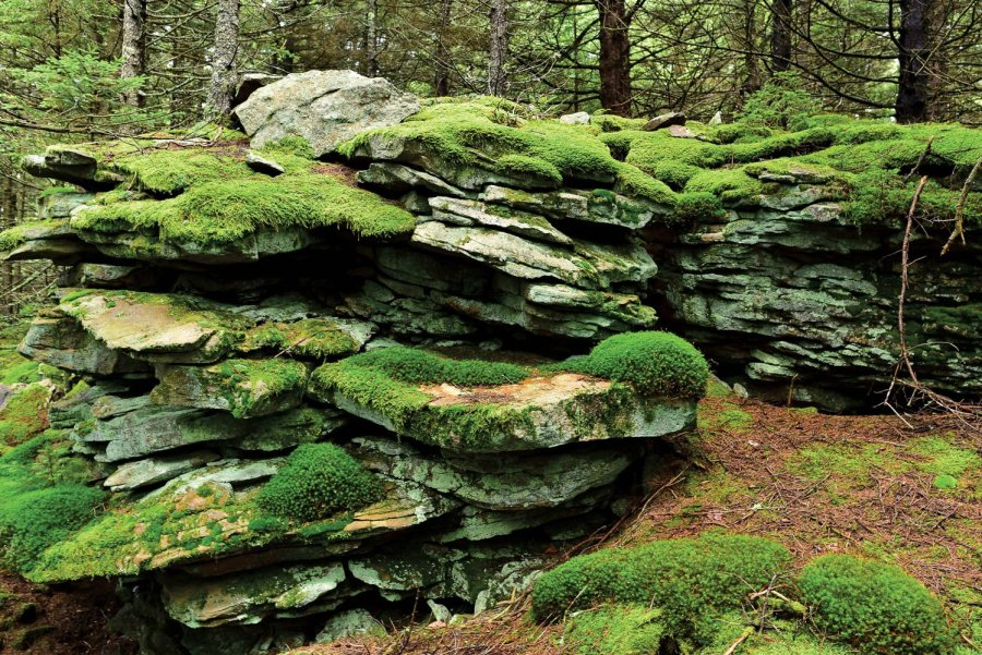 WV Mosses - Mossy Outcrop