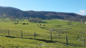 Highland County, Virginia, mountains, country, living, live, here, resident, Meadowdale, cattle, cows