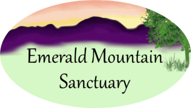 Highland County, Virginia, Emerald Mountain Sanctuary, nature, retreat, forest bathing, walk, walks, hike, foraging, class, classes, lesson, lessons