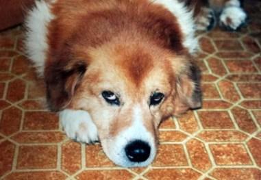 Highland County, Virginia, Monterey, dog, dogs, love, family