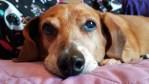 Highland County, Virginia, dog, Alex, dachshund, blog, author, point of view, best dog blogs, blog with a dog, the dog blog, puppy blog,