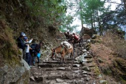 A train of donkeys make the steep drop to the river and a small bridge crossing between Phakding and Monjo.