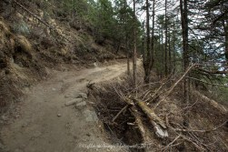 The very last part of the trail between Namche Bazaar and Tengboche.