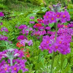 Marwood Hill Gardens, Ilfracombe, Devon, UK.