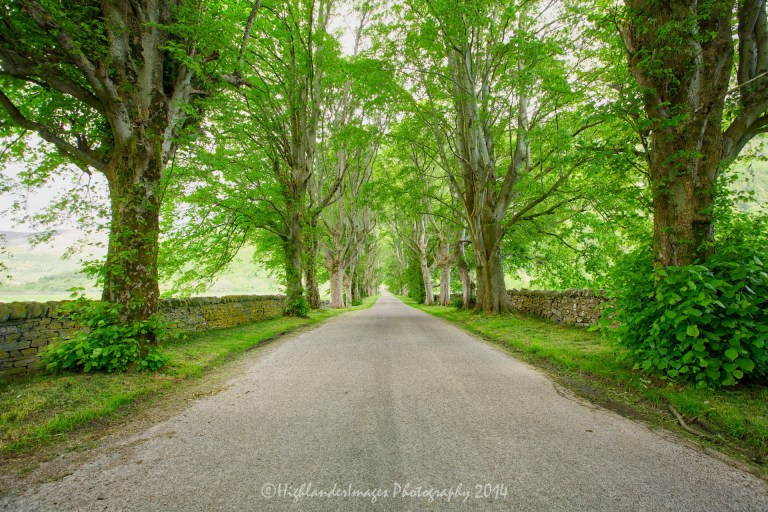 Tree lined road, Letters, near Ullapool, Scotland