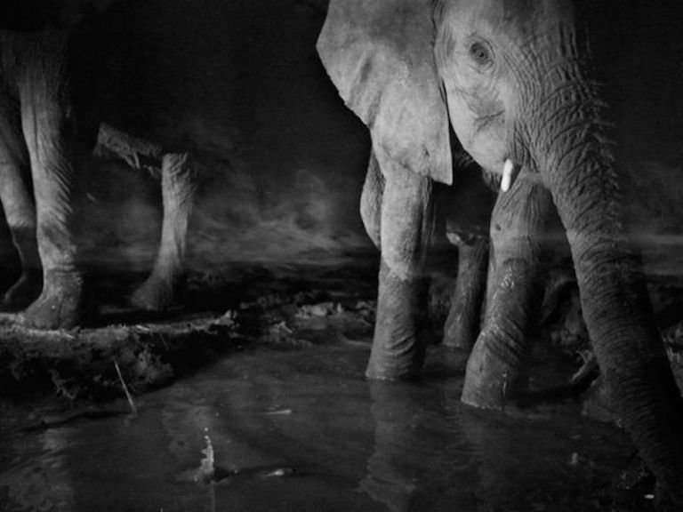 michael-nichols-elephants_4033_600x450