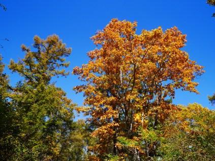秋色の野辺山10