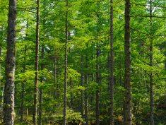 八千穂高原の新緑1