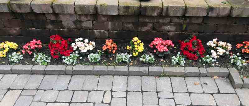 Bright flowers line a brick garden fence