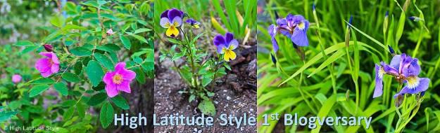 Alaskan flowers for 1st blogversary #flowers #AlaskaFlowers