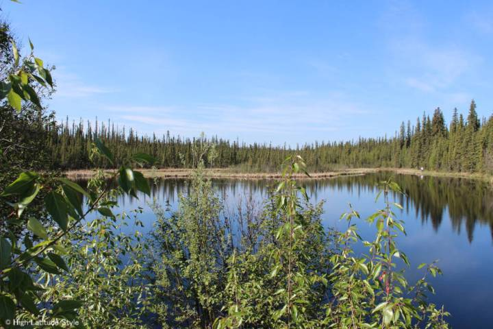 Alaska landscape of the taiga underlain by permafrost