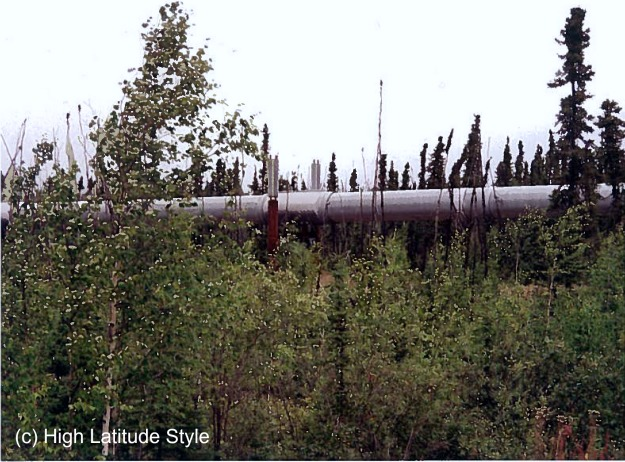 trans-alaska pipeline hidden in the woods