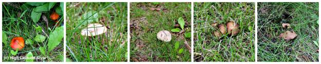 various mushrooms that grow in Alaska