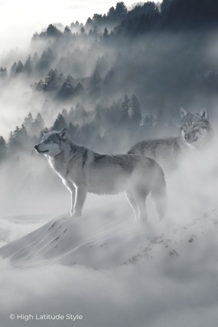wolves standing in the fog looking for prey