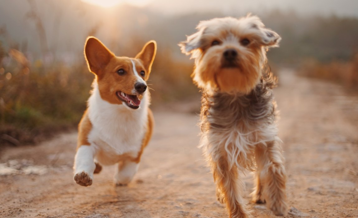 two dogs that a highly sensitive person has a special bond with