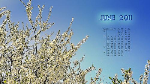June 2011 Youth Calendar