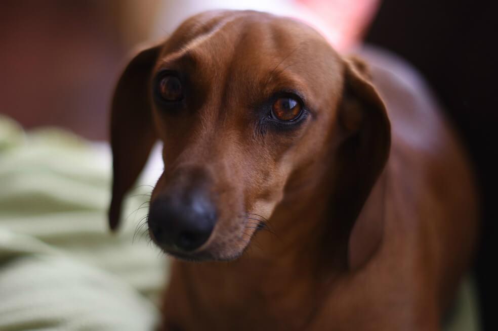 Estudio explica por qué los perros enternecen a las personas con su mirada