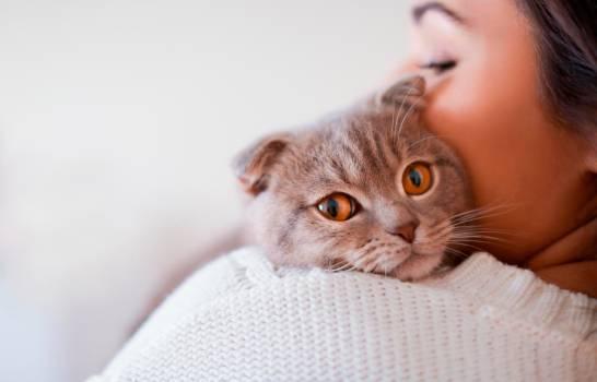 ¿Por qué los gatos comen hierba?