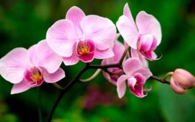 Las orquídeas están de fiesta en el Jardín Botánico