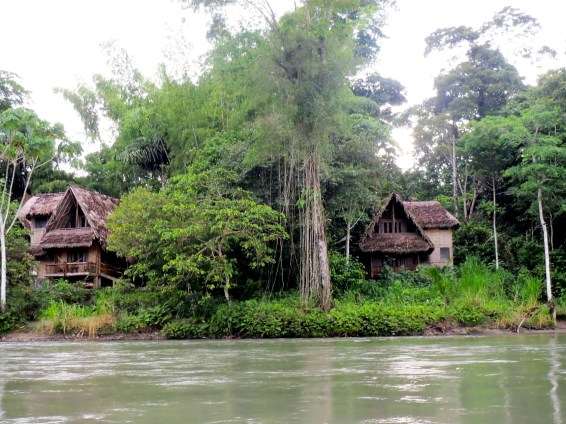 We stayed in the lodge on the right. In between the two lodges is an aerial root, which absorbs water vapor in the air. It is very common in the Amazon.