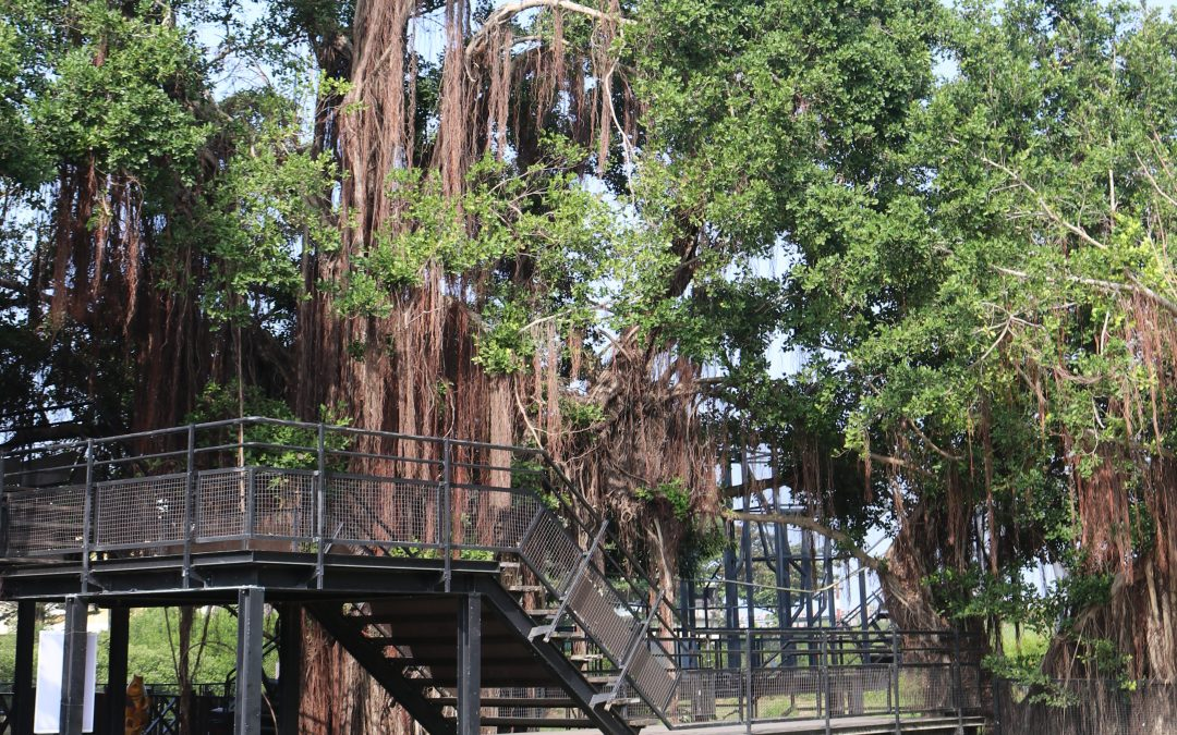 Adventures in Tainan Tree House