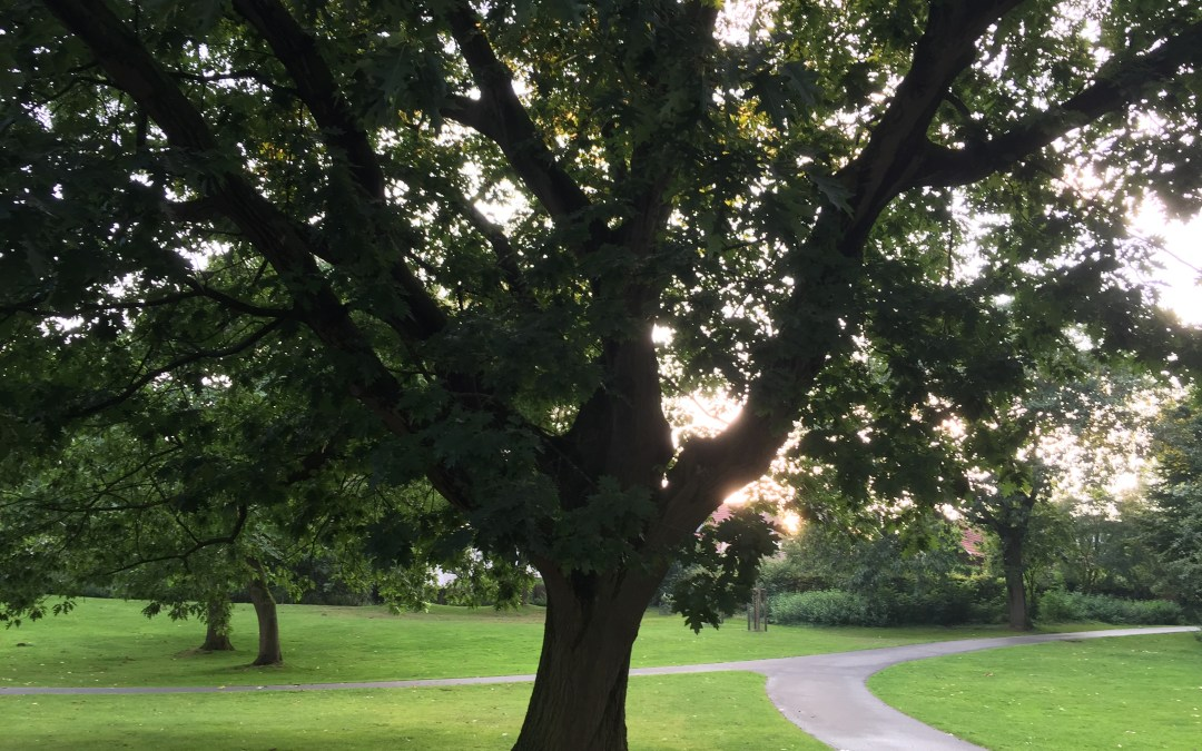 Looking around and within: The effects of nature on mental health