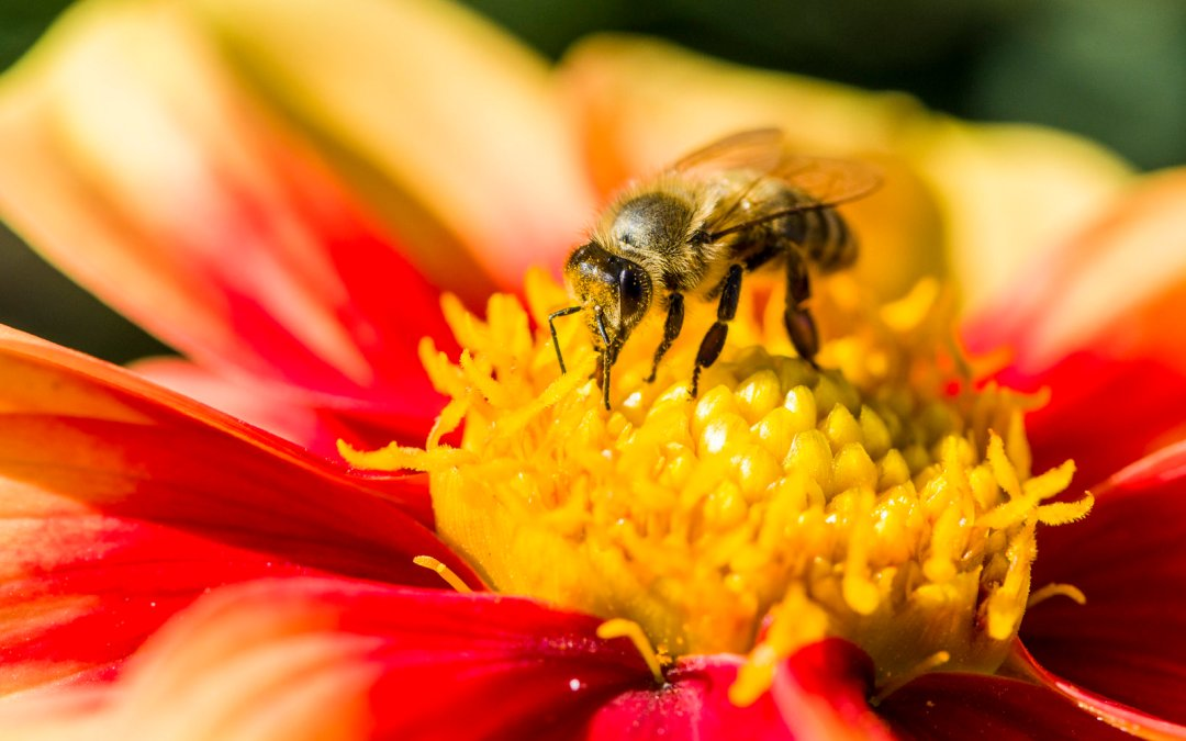 Helping save the bees is easier than you think