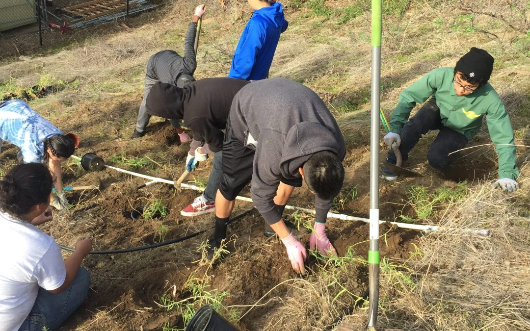 An opportunity for students and the environment