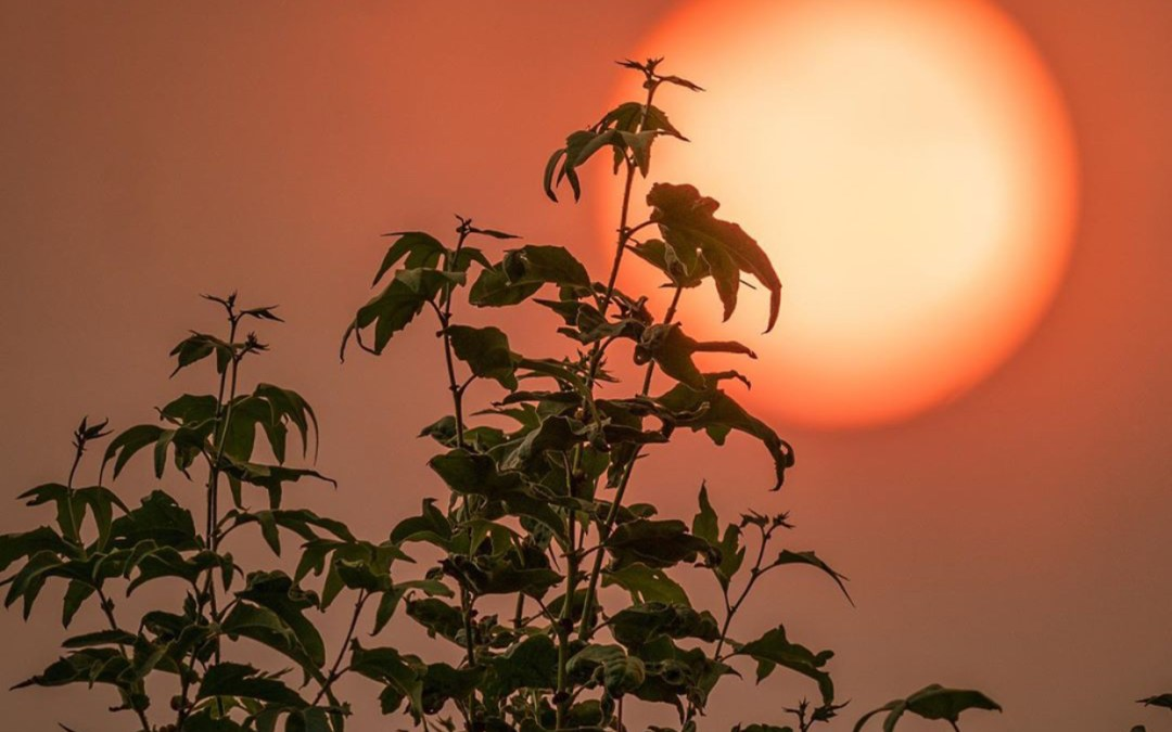 A west coast in flames — how to prepare for emergencies