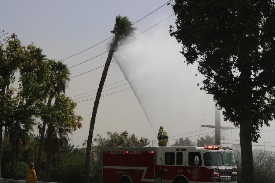 High winds spark fire — twice — on palm tree across street from Sunny Hills, forcing evacuation of staff, teachers