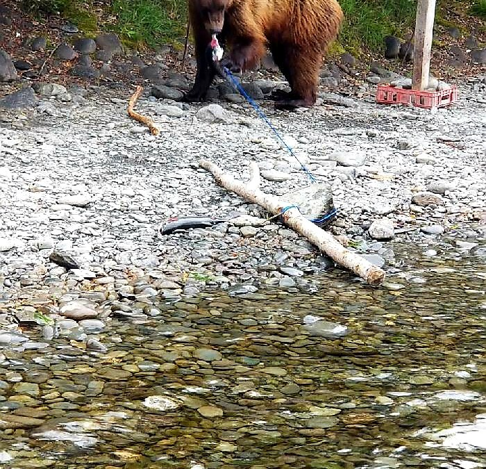 Column: A COVID-19 summer in bear country