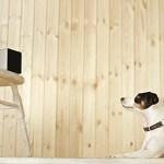 Animais de estimação: companhia à distância