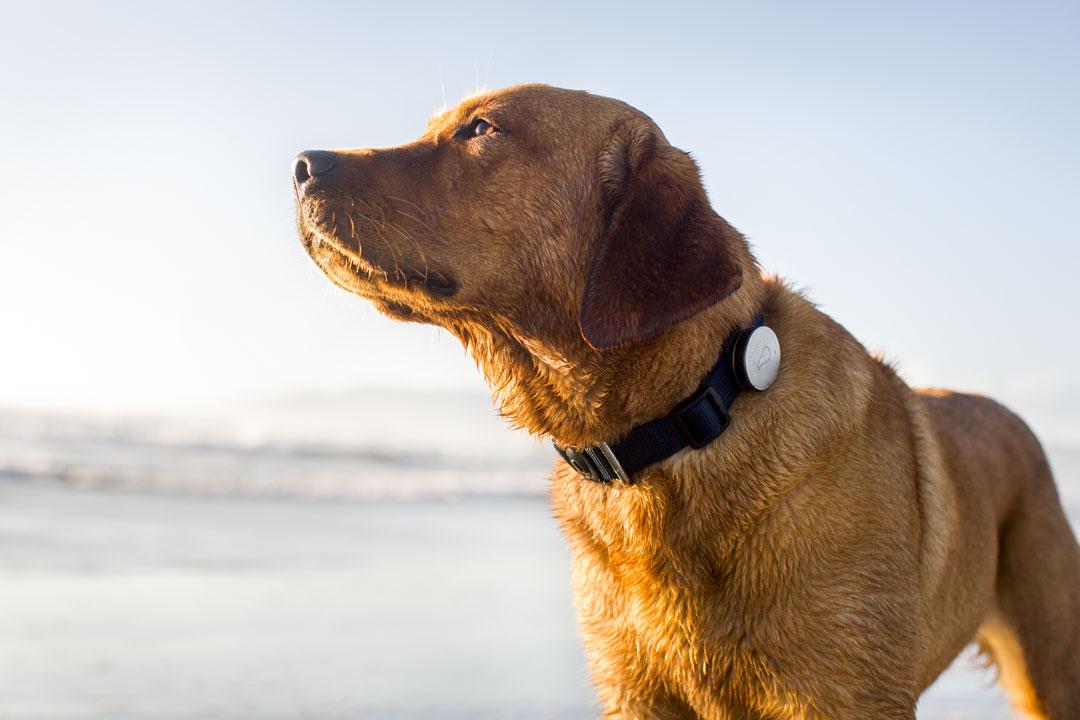 Whistle, o melhor amigo do seu cão