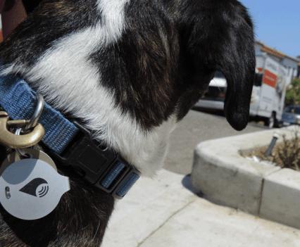 TrackR Bravo, um gadget para saber onde foi parar o cão