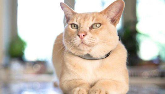 Gatos: 7 gadgets para 7 vidas