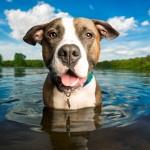 Cães e gadgets: 7 mimos para o seu melhor amigo