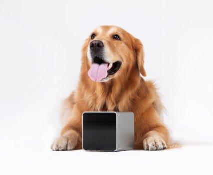 Cães e Gadgets. Petcube