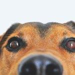 As 5 melhores apps para o melhor cão do mundo!