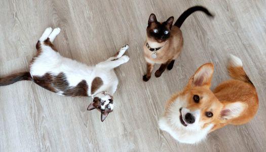 7 gadgets perfeitos para quem tem cães e gatos