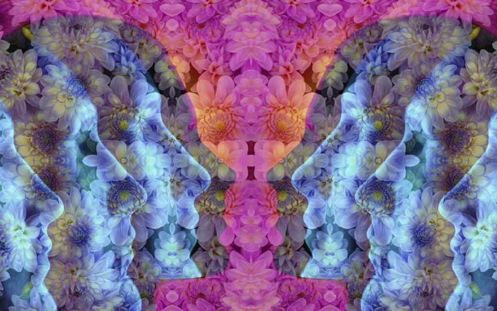 acid, LSD, psychedelics