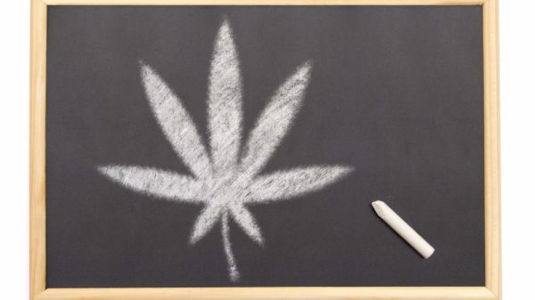 10 Most Weed-Friendly Colleges in the Country