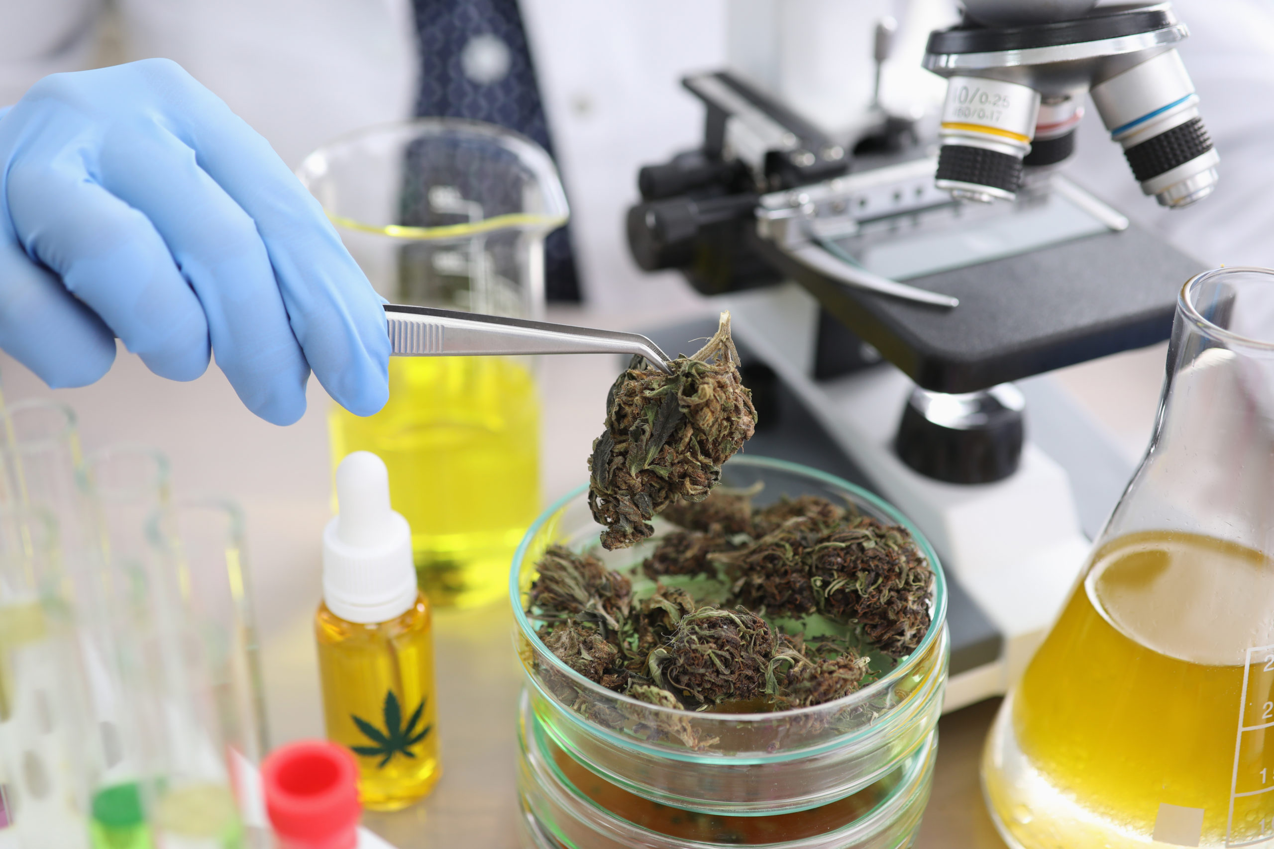 medical marijuana platform offering scholarships cannabis research featured scaled - Medical Marijuana Platform Offering Scholarships For Cannabis Research