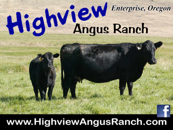 Highview Angus Ranch CJD Ad
