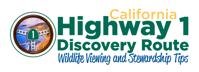 Wildlife Viewing and Stewardship Tips